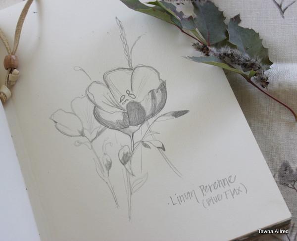 flax-sketch