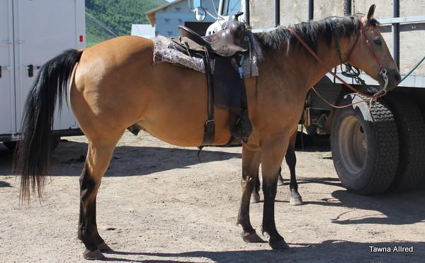 my-horse