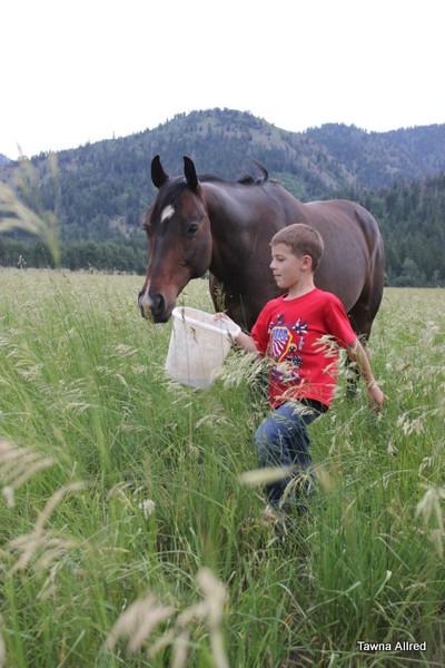 horse-wyo