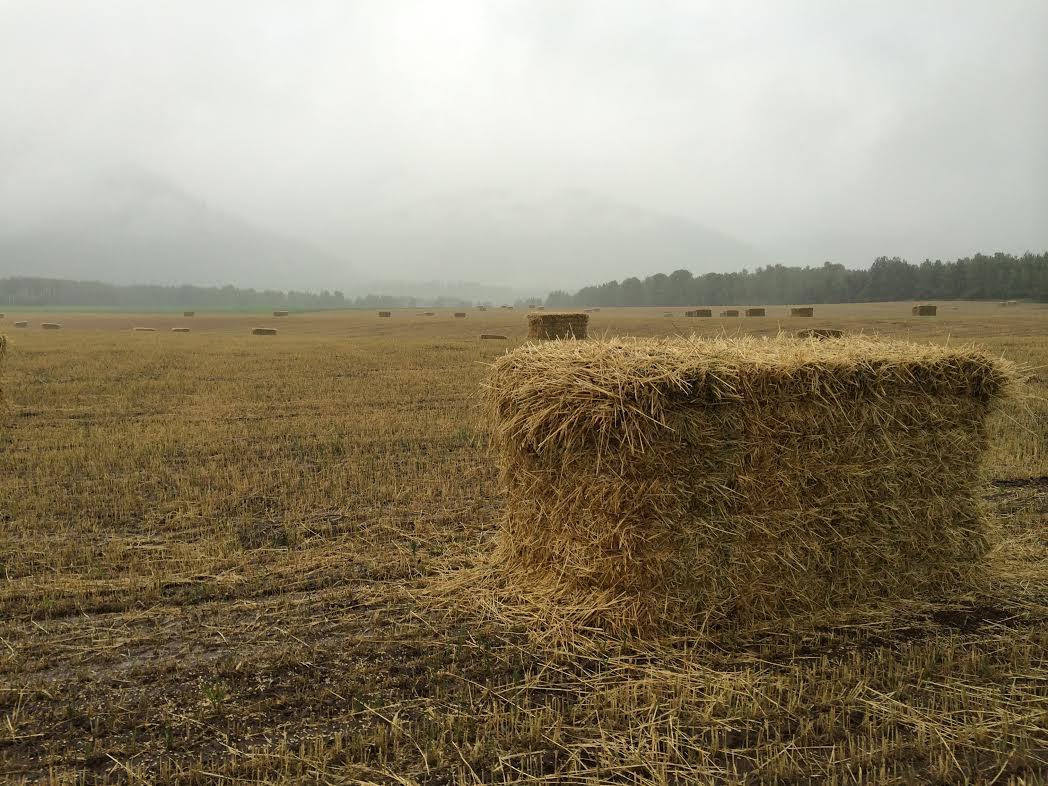 hay-field